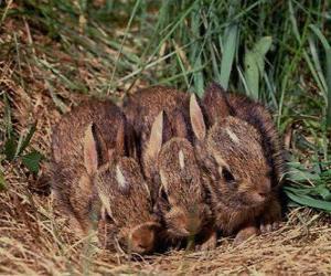 Rompicapo di Tre conigli aspettando la madre