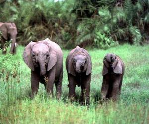 Rompicapo di tre elefanti piccoli