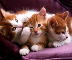 Rompicapo di Tre gattini bianco e marrone