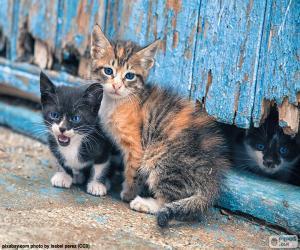 Rompicapo di Tre gattini