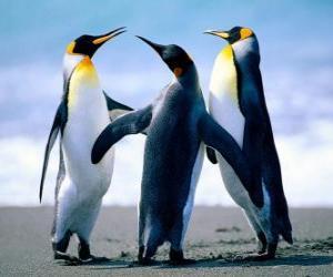 Rompicapo di Tre pinguini belle