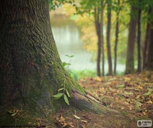 Rompicapo di Tronco d'albero