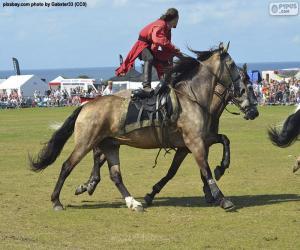 Rompicapo di Trucchi di equitazione