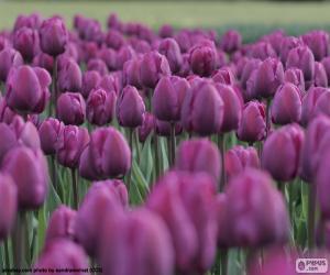 Rompicapo di Tulipani viola