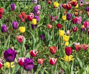 Rompicapo di Tulipani