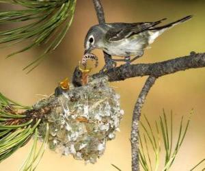 Rompicapo di Uccello con i suoi pulcini