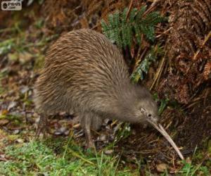 Rompicapo di Uccello kiwi