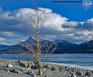 Rompicapo di Un albero morto vicino al lago