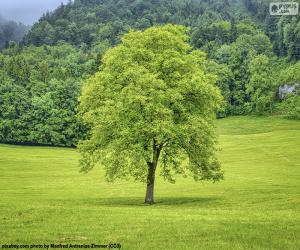 Rompicapo di Un albero nel prato