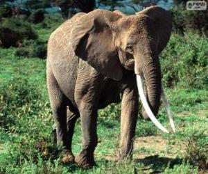 Rompicapo di Un elefante con zanne