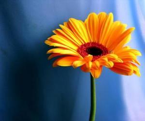 Rompicapo di Un fiore semplice, che bel regalo per tua madre