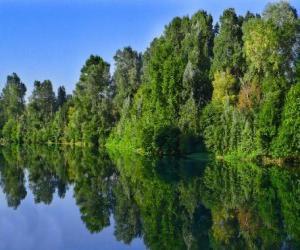 Rompicapo di Un fiume con il riflesso degli alberi nell'acqua