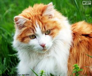 Rompicapo di Un gatto elegante