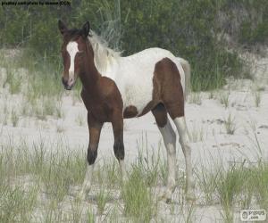 Rompicapo di Un giovane cavallo selvatico