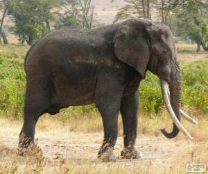 Rompicapo di Un grande elefante