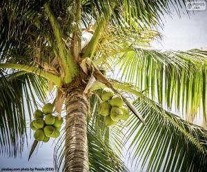 Rompicapo di Un palma da cocco