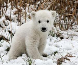 Rompicapo di Un piccolo orso