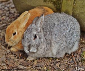 Rompicapo di Una coppia di conigli