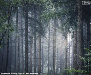 Rompicapo di Una fitta foresta