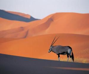 Rompicapo di Una gazzella di Grant con lunghe corna nelle dune del deserto