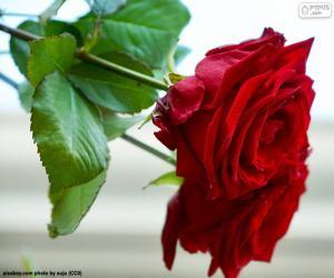 Rompicapo di Una rosa bella