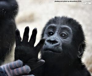 Rompicapo di Una scimmia curiosa
