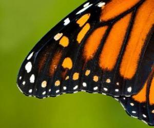 Rompicapo di Un'ala di farfalla