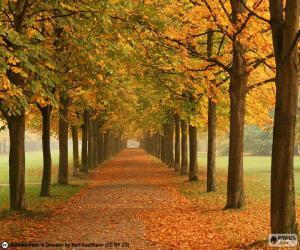 Rompicapo di Via tra gli alberi in autunno