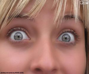 Rompicapo di Viso occhi chiari