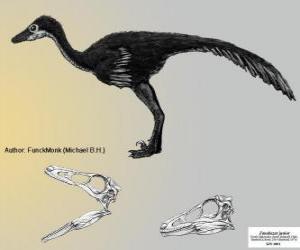 Rompicapo di Zanabazar è uno della più grande specie noto, con un cranio di 272 mm