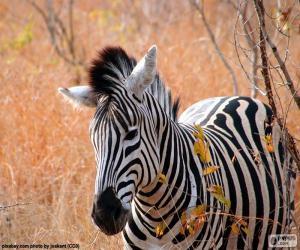 Rompicapo di Zebra