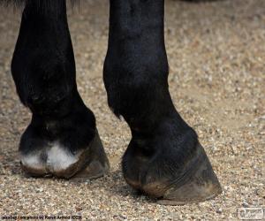 Rompicapo di Zoccoli di cavallo