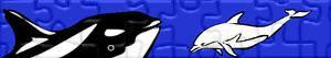 Puzzle di Delfini e altri mammiferi marini
