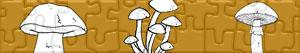 Puzzle di Funghi